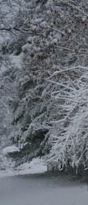 Snow Path 001