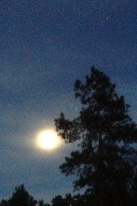 Moonlight pine and planet