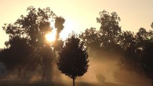 Sunrise_Trees_wide