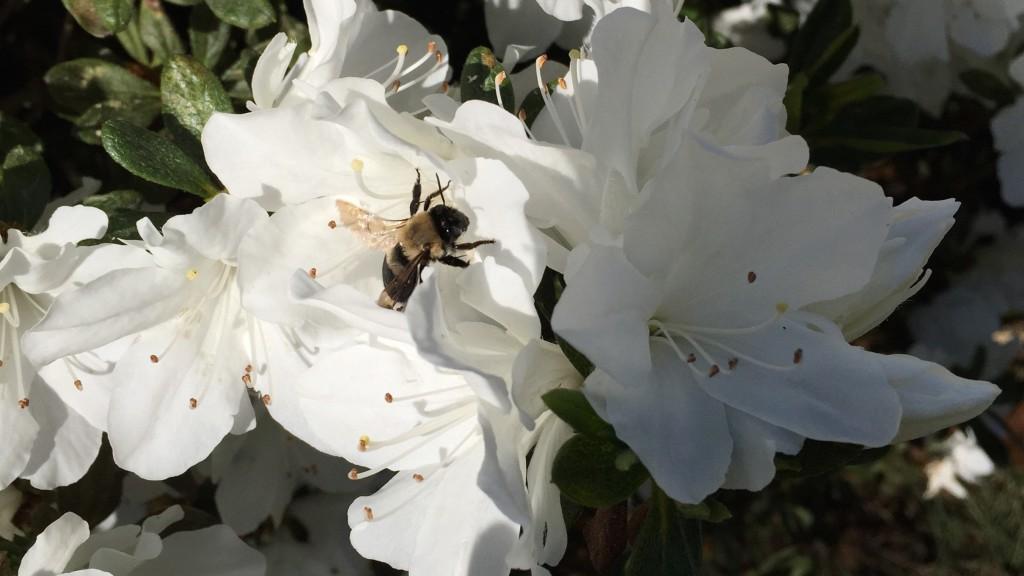 Bee climb