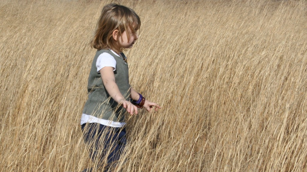 In field of grasses