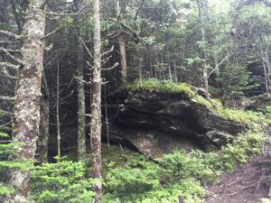 Mt Mitchell 2